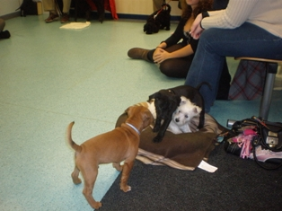 Image Result For Dog Training Classes Wigan