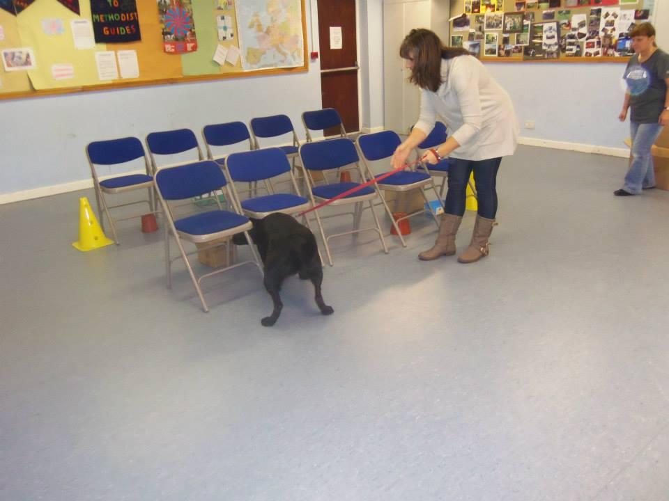 Dog Training Classes Parker Co