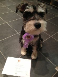 Otto with his GCDS Puppy Award