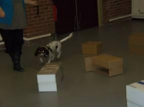 Rolo, super scent dog!