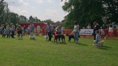dog show 10