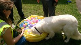 dog show 8